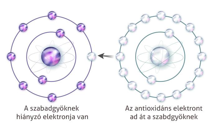antioxidáns szabadgyök